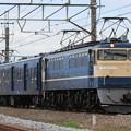 試9691レ EF65 501+マニ50-2185+EF60 19