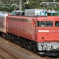 配9496レ EF81 81+マニ50-2186