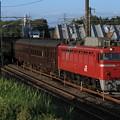 回9136レ EF81 97+旧型客車 7両