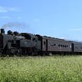 9331レ C11 325+旧型客車 3両