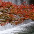 写真: 紅葉滝