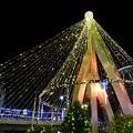 写真: light tree