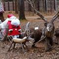 写真: サンタが森にやってくる
