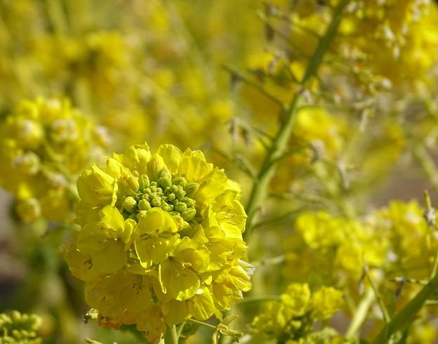 mellow・yellow