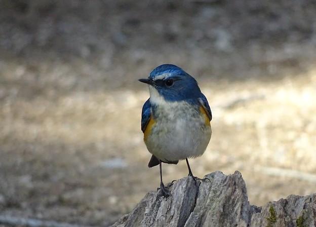 青い鳥つながり