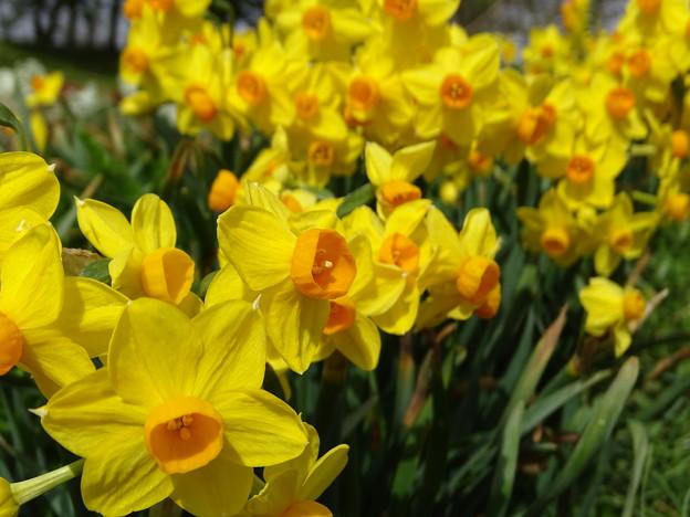 spring yellow