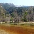 写真: 田代池
