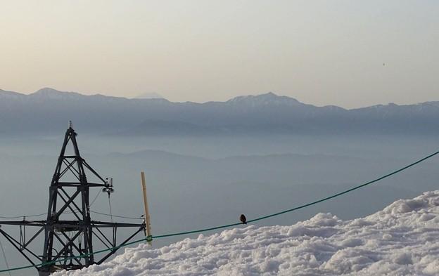 写真: 雲海イワヒバリ