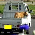 写真: dog on car 2