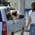 写真: 犬が乗っています