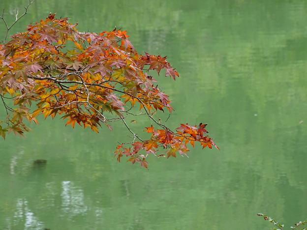 写真: petit紅葉