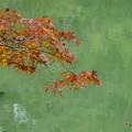 Photos: petit紅葉