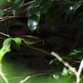 写真: 虫ゲット