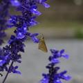 写真: 青い森