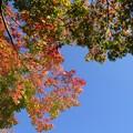 写真: 紅葉空