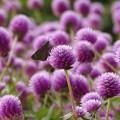 Photos: color purple