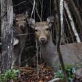 Photos: 鹿さんに出会った~