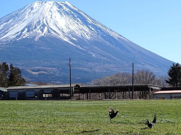 富士山麓の決闘