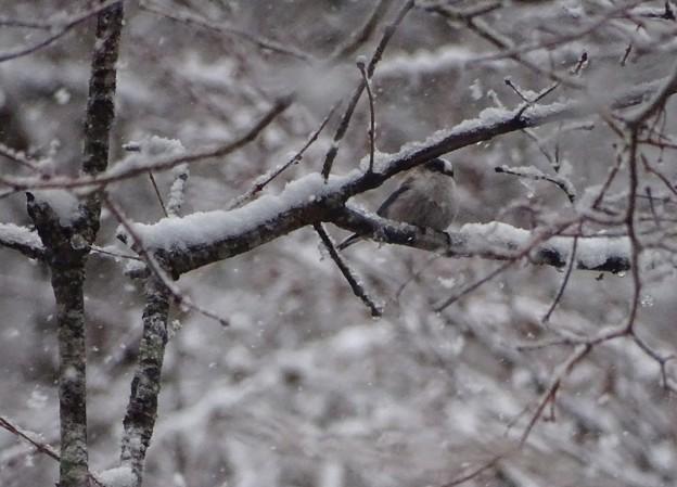 平成なごり雪