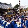 Photos: 春祭り
