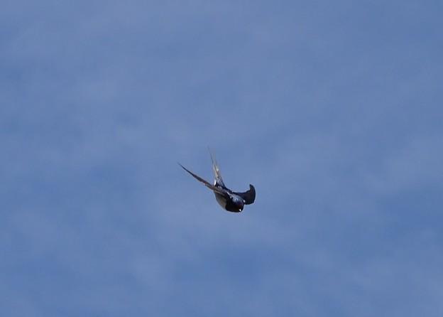 Photos: 燕