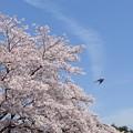 Photos: 四月の空に