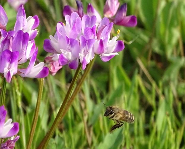 働くミツバチ