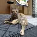 Photos: 温泉猫