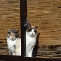 Photos: 陽溜り