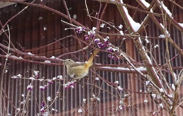 Photos: 雪ジョビ