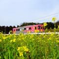 Photos: 春だったね2020