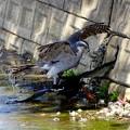 Photos: wild life