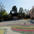 Photos: 失われた春・高大寺