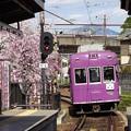 Photos: 失われた春・嵐電