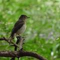 Photos: 秋鳥green