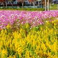 Photos: colourful