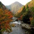 Photos: 紅葉川