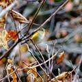 落ち葉のコンチェルト