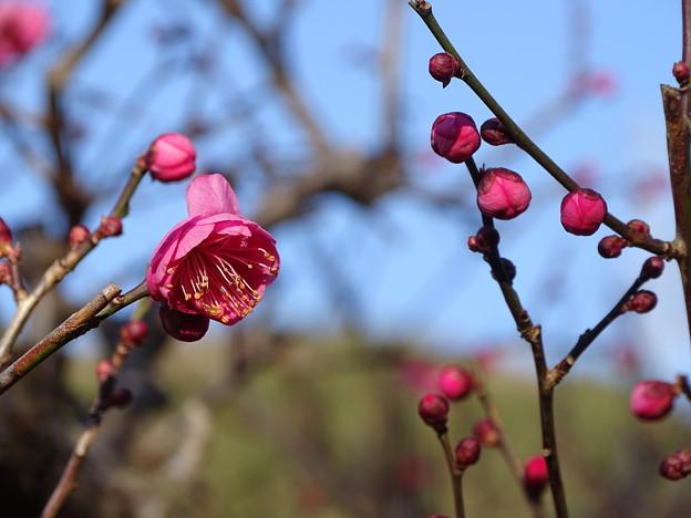 Photos: 初春