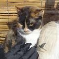 Photos: 硝子猫