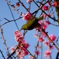 Photos: いただきまーす
