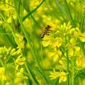 Photos: 春色yellow