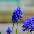 Photos: 春色blue