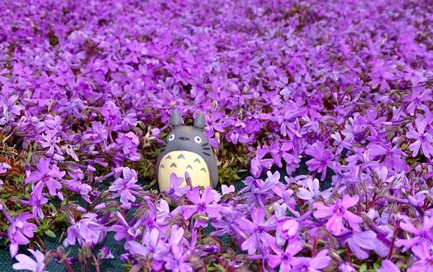 芝桜のトトロ