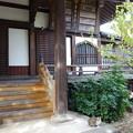 Photos: 本堂-善光寺 (文京区小石川)