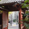 Photos: 門から見える街並-善光寺 (文京区小石川)