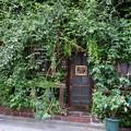 写真: 植物と扉 (新宿区新宿)