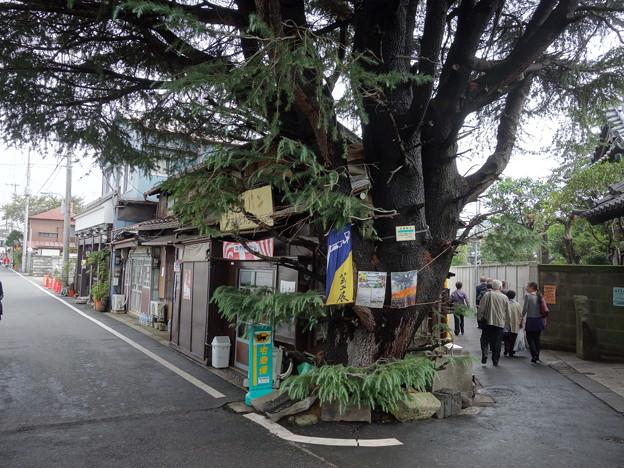 妙行寺の前 (台東区谷中) - 写真...