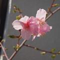 Photos: 新入生から2年生への春