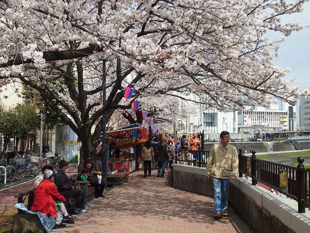 桜の下でお楽しみ